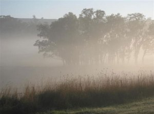 Picture from http://www.publicdomainpictures.net/view-image.php?image=14295&picture=foggy-morning